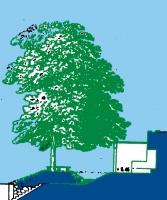 26_albero.jpg